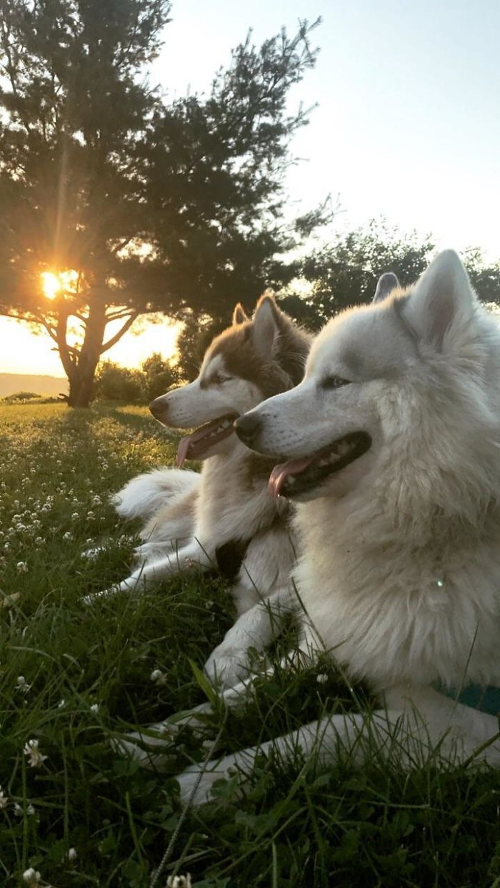 Best Picture I've Ever Taken Of My Dogs