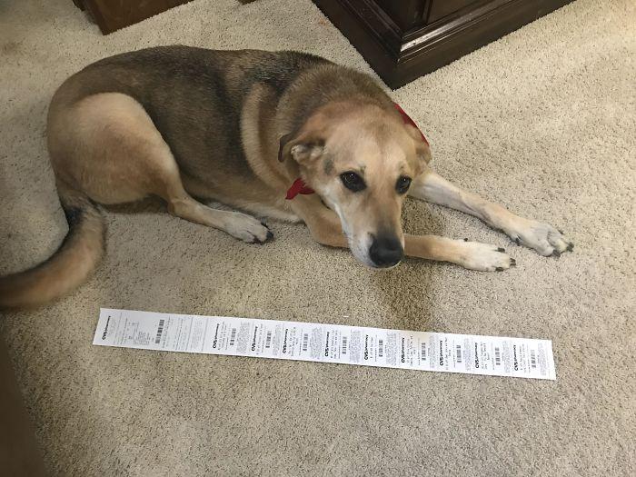 El ticket por comprar una botella de aceite vegetal (perro al lado para comparar)