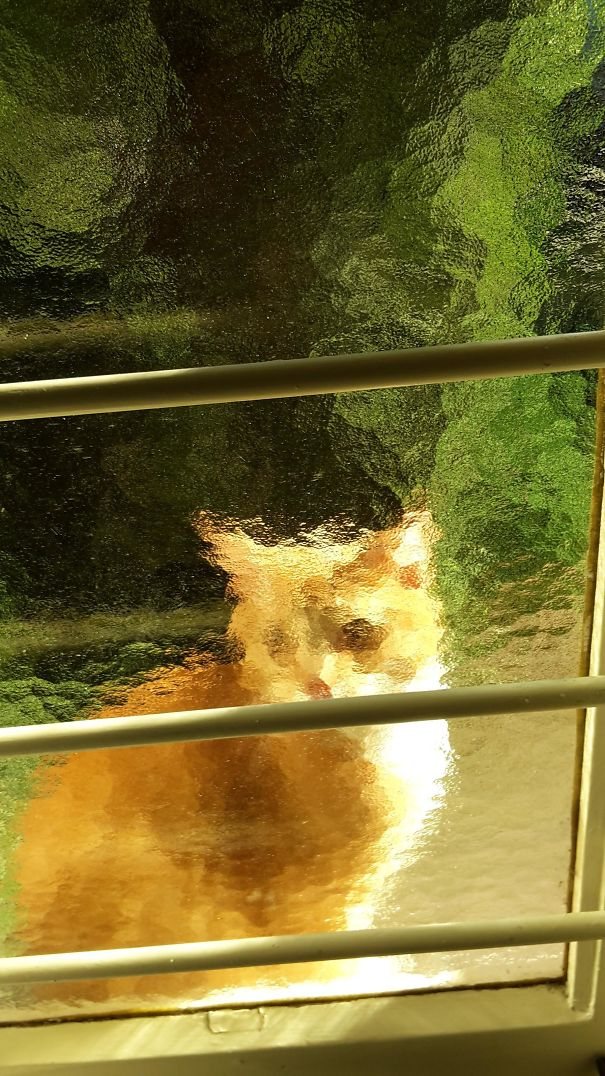 This Cat Looks Pretty Cool Through The Glass Of One Of Our Windows Like Some Sorta Painting
