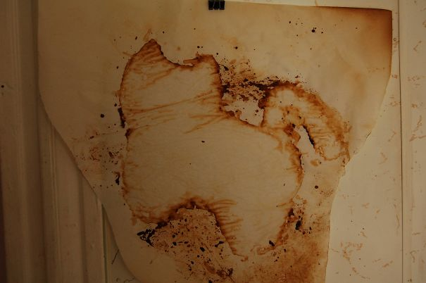 My Roommate Cooked A Cat Shaped Pizza, The Parchment Paper He Cooked It On Now Looks Like A Cave Painting Of A Cat