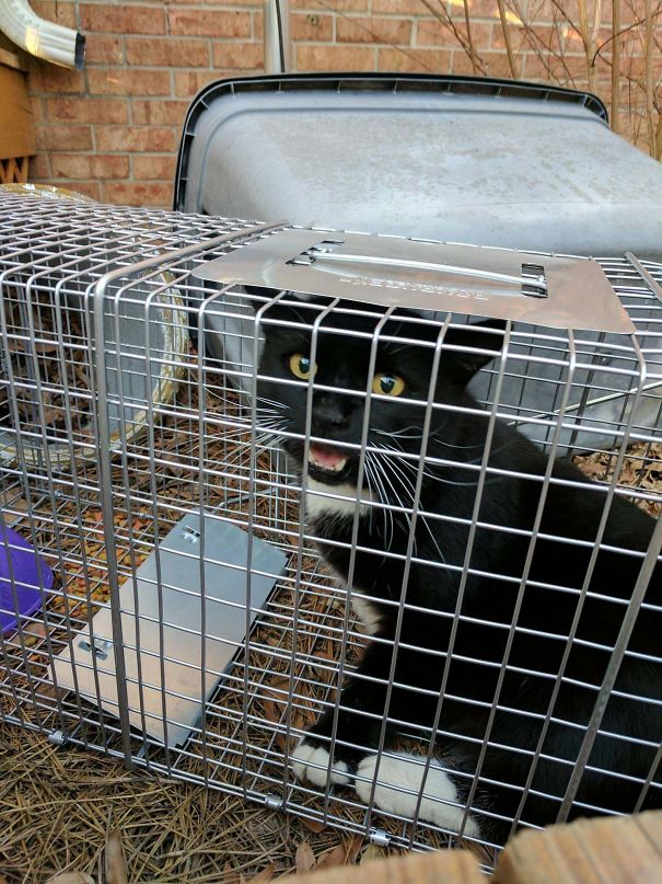 When You Set A Possum Trap And Your Cat Is An Idiot