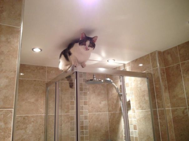 Climbs To Stupid Places, Then Cries For Me To Help