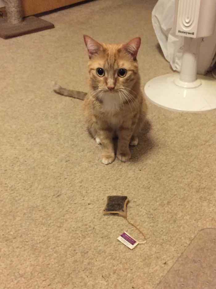Some Cats Bring Their Humans Birds And Mice. Oliver Brings Me Teabags