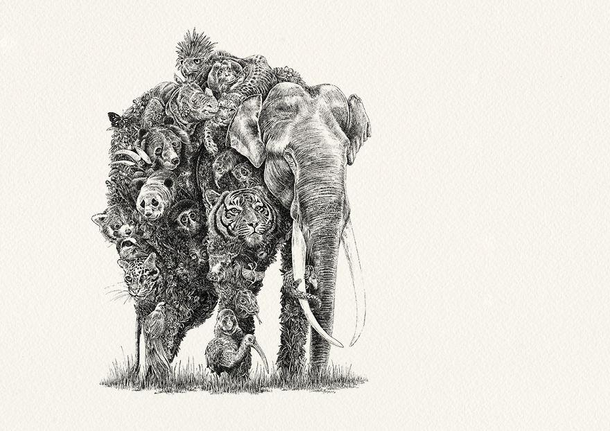 Asian Elephant / Asia