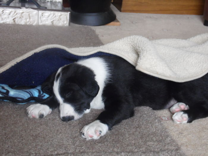 And Shilo Again Taken An Hour After The First Photo Above Tired Out From Running Around The Garden. Almost 4 Years Later He's Still The Same, Either Running Around Playing Or Asleep. There Is No In Between.i Love Him So Much.☺♥