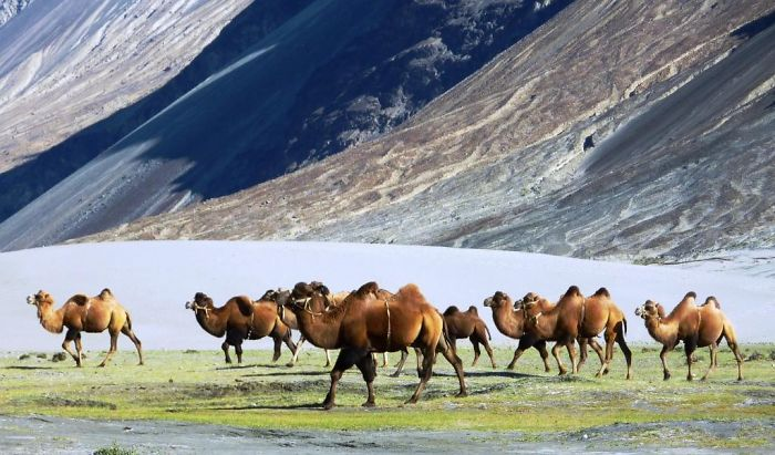 I Photographed The Nubra Valley In Ladakh