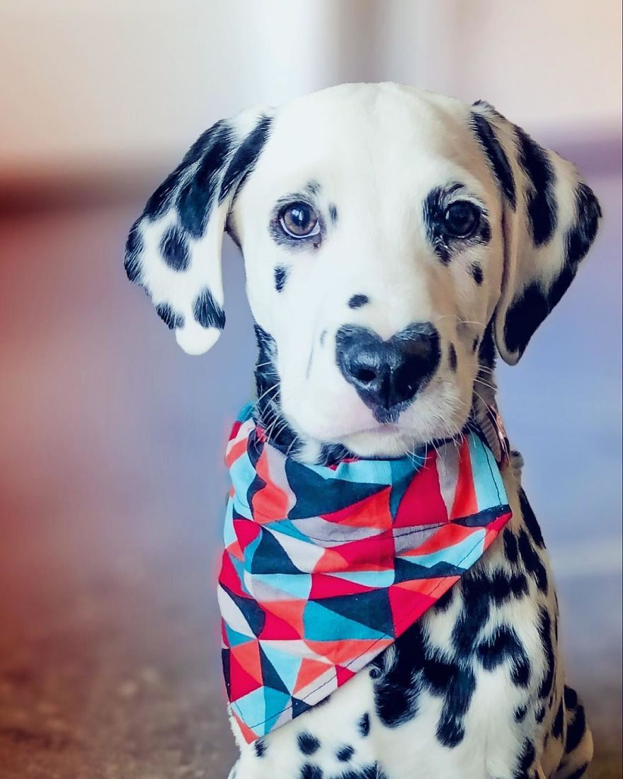 Dog With Heart Mark On Nose Enchants Where It Passes