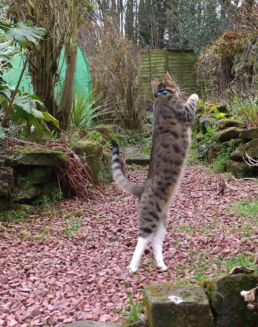 Edmund The Jumping Kitty Goes Outside For The First Time