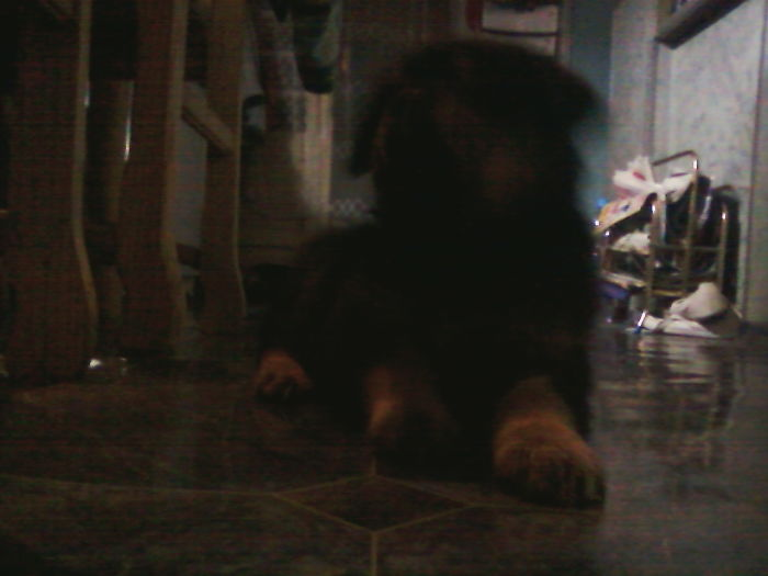 I Will Be Forever Sad Because 14 Years Ago (When This Picture Was Taken) I Had Very Poor Camera :/ Rottweiler, Adopted, And A Big Fan Of Playing With Chickens (They Don't Like It Though)