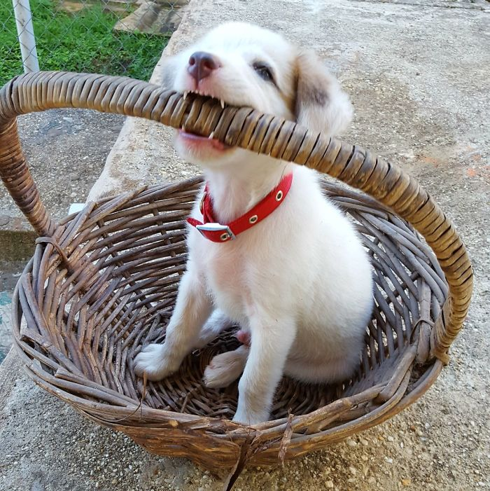 Basket With Puppy!
