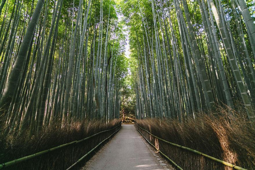 Arashiyama Bamboo Groves, Western Kyoto