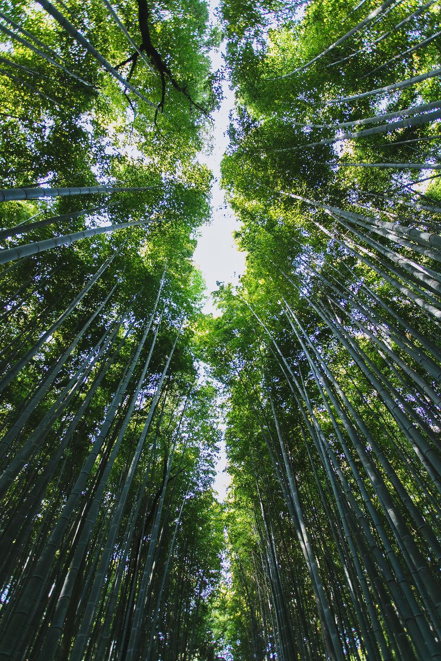 Bamboo Groves, Western Kyoto