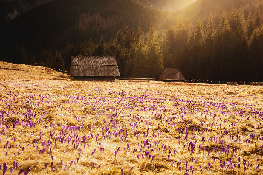 This Is How Spring Looks Like In The Polish Mountains