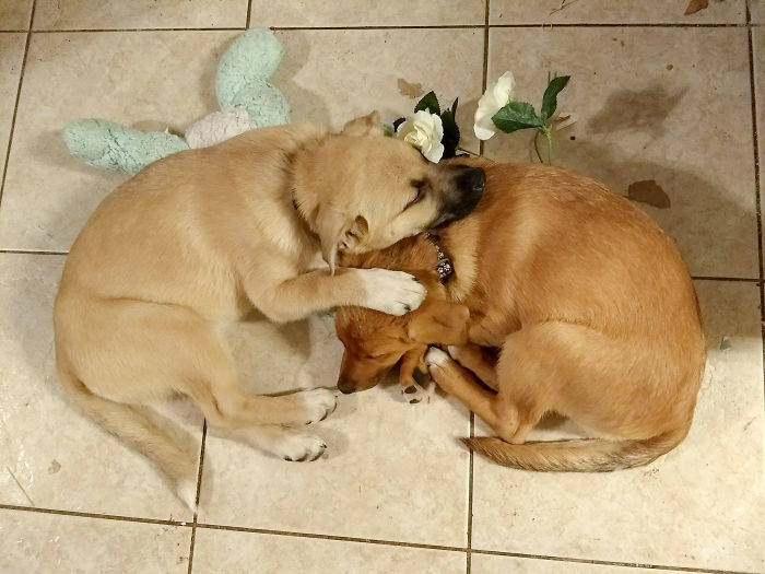 Pupper Sisters: Rose Ali & Georgia Ray
