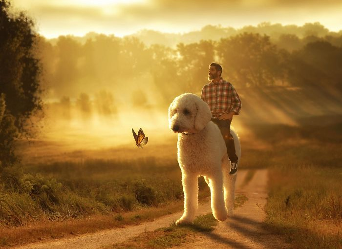 Photographer Makes Funny Montages With Photos Of His Giant Dog (New Pics)