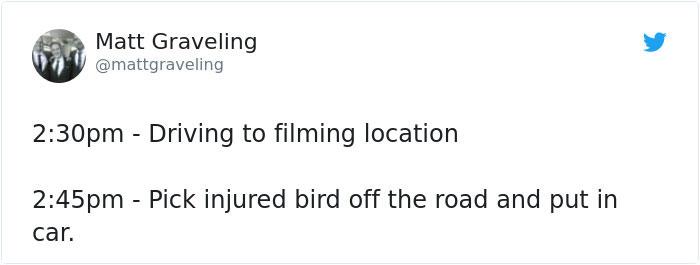 angry-bird-injured-red-kite-rescued-bbc-reporter-matt-graveling-001