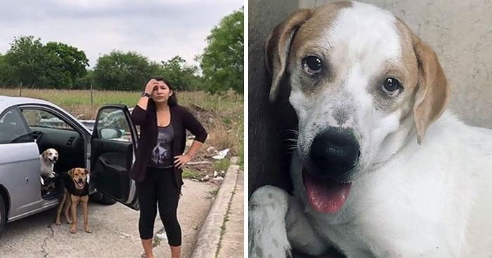Esta mujer fue pillada mientras abandonaba a sus 4 perros, y se llevó su merecido
