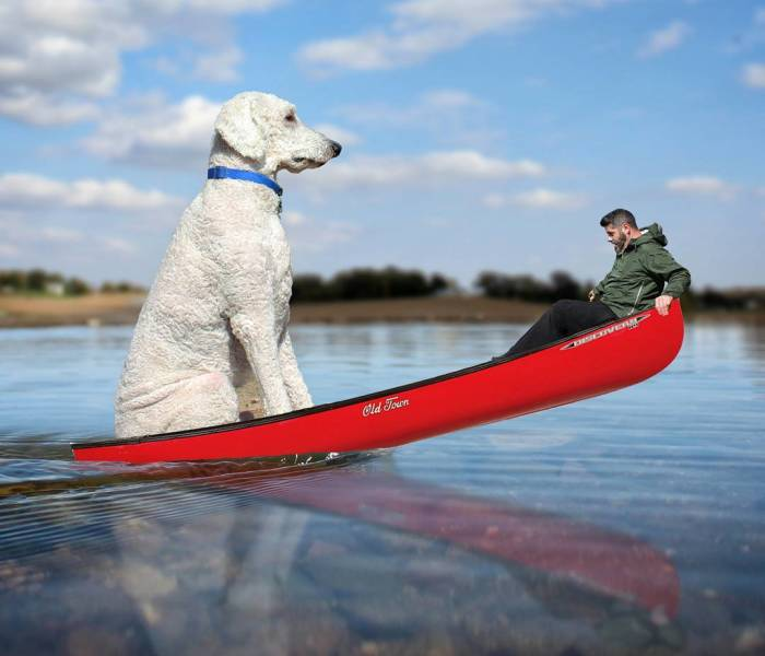 Photographer Creates Amusing PS Manipulations Featuring His Giant Dog