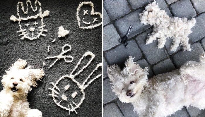 Our Dog Leo Loves Grooming And We Love Making Art From His Hair