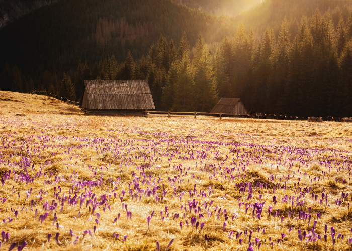 I Capture The Surreal Beauty Of Spring In Mountain Meadows In Poland
