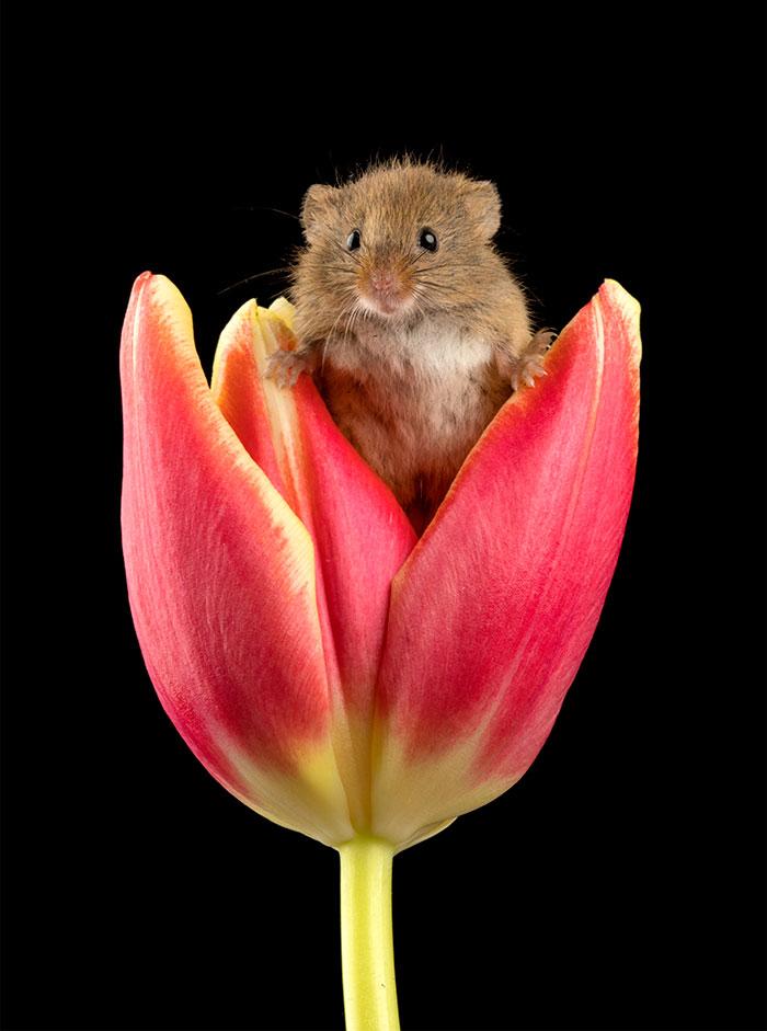 Фотографии мышей