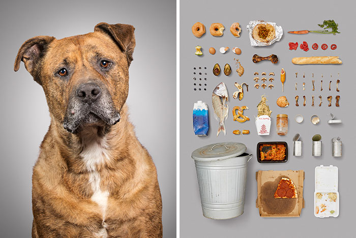 I Photographed 6 Dogs And Their Possessions To Show You The Life They Live