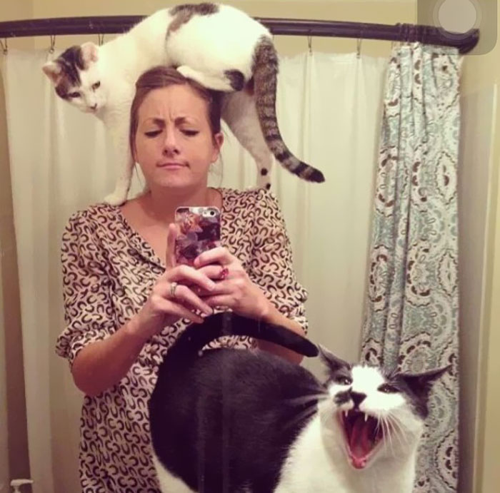 Trying To Take A Selfie With Your Cats