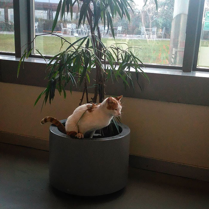 """The Cat Who Entered The Dining Room While The """"My Life Is So Shitty"""" Mindset Among The Lunchtime Of My Sunday Lunch, Jumped On The Flowerpot In Front Of Me"""