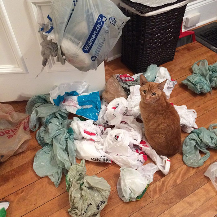 """I Don't Know – I Just Walked In And There Were Bags, Like, Everywhere. Probably An Explosion"""