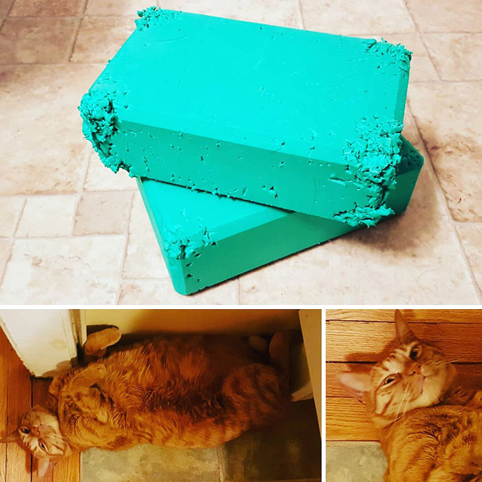 When I Woke Up This Morning I Found My New Yoga Blocks Like This And Found A Smirking Orange Tabby With Green Foam In His Nails