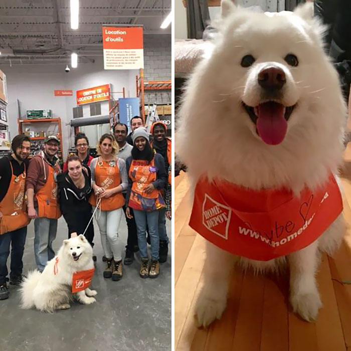 My Dog Ran Away And Wandered Into The Local Home Depot. This Is What I Arrived To When I Picked Her Up