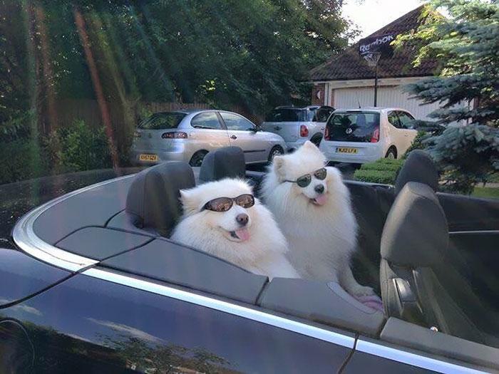 Get In, Girl