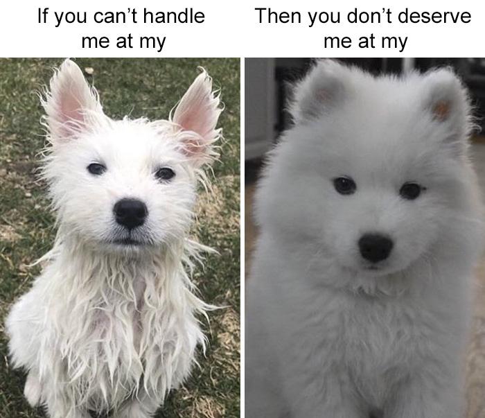 Fluffy White Diva