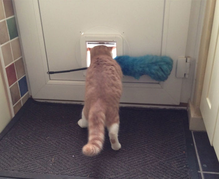 My Cat Keeps Trying To Steal The Feather Duster, Luckily He Never Gets Too Far