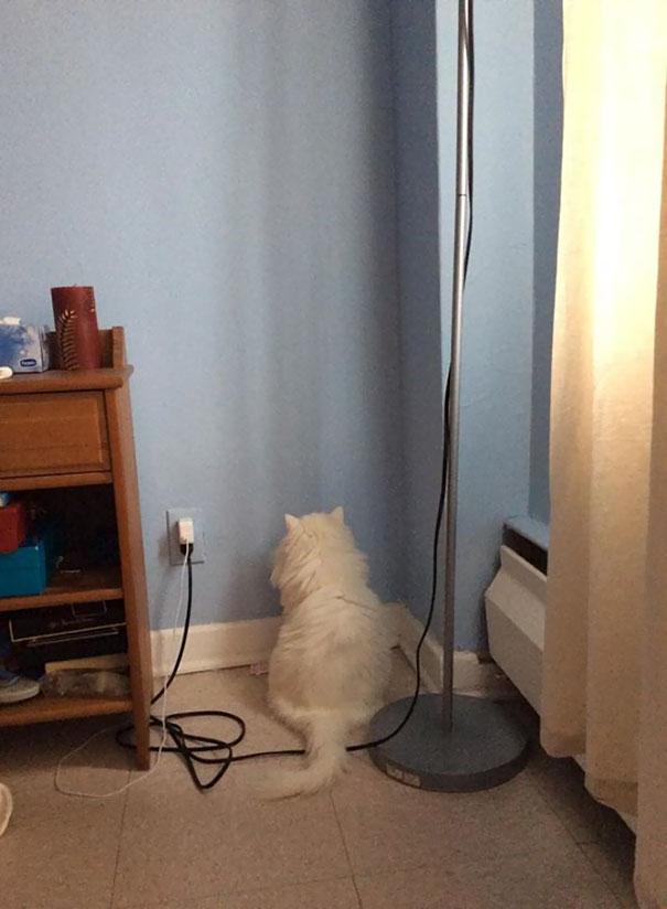 I Never Said I Had A Smart Cat (Don't Worry She's OK)