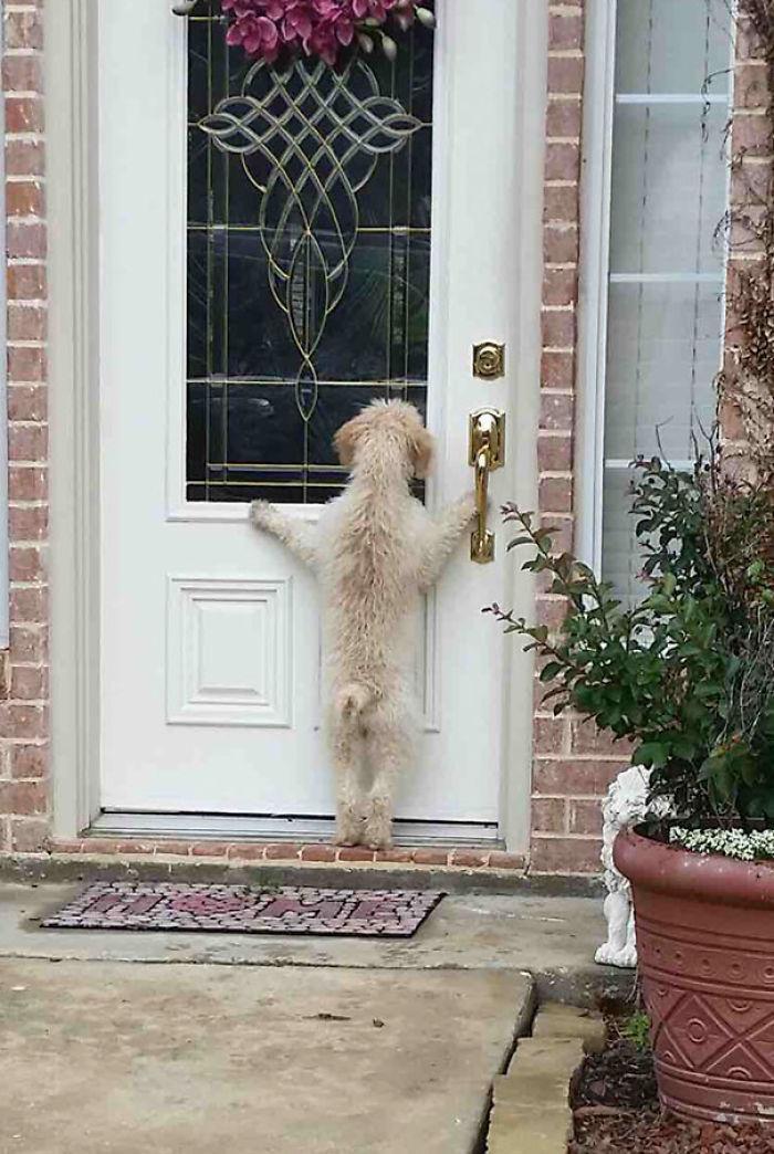 Mi perro huyó, y tras buscarle durante horas, volví a casa y...