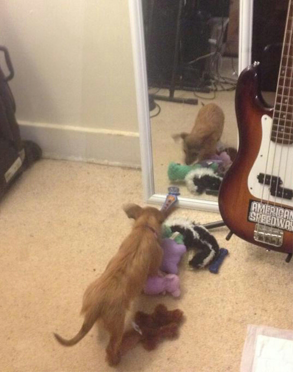 She Brought All Her Toys Over So The Mirror Doggy Could Play With Them