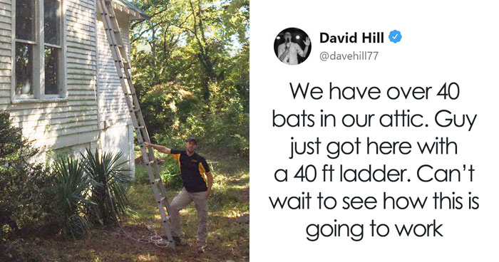 Guy Pays $800 To Get 40+ Bats Out Of His Attic, Doesn't Expect Contractors To Do This
