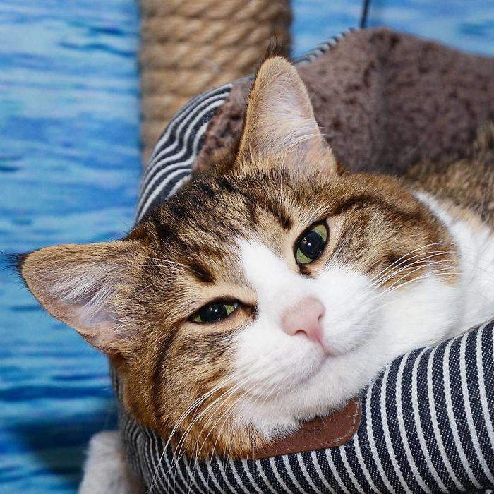 Handicapped-Cat-Rexie-The-Handicat-Dasha-Minaeva