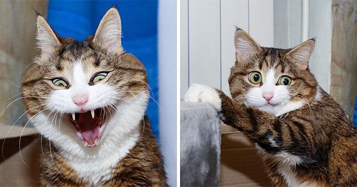 Este gato tiene una discapacidad, pero ha conquistado internet con sus divertidas expresiones faciales