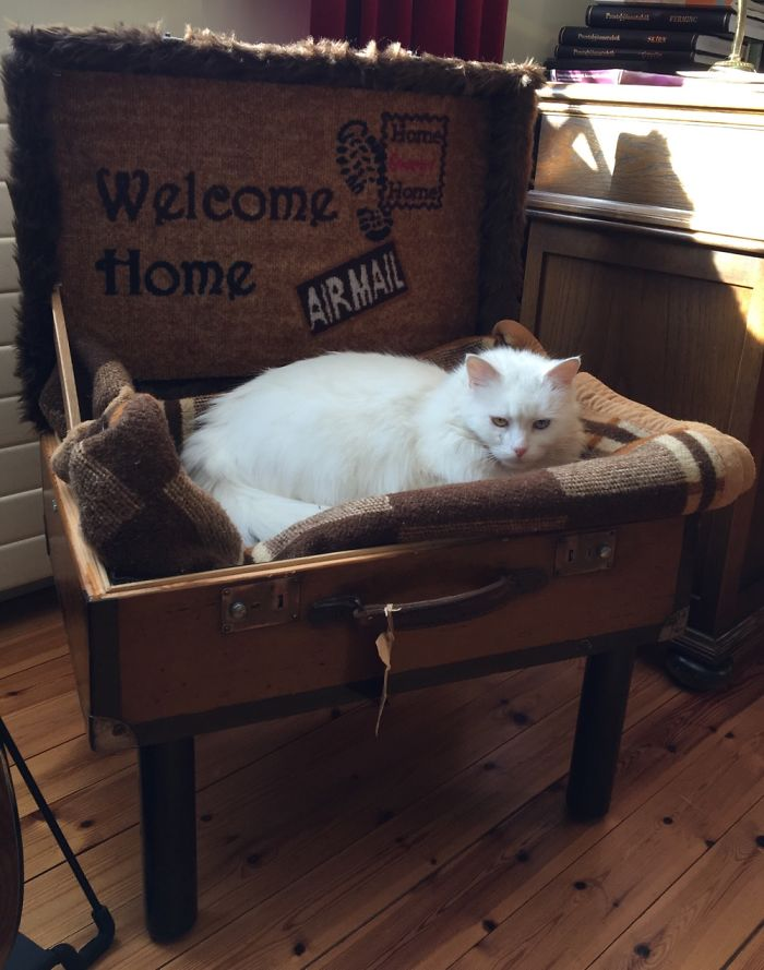 Me And My Father Made This Suitcase-Bed For His Fluffy Princess… She Approved It 😻