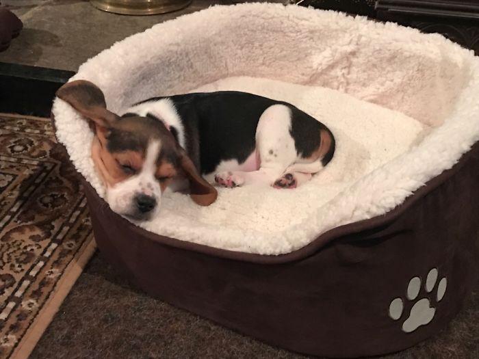 First Nap