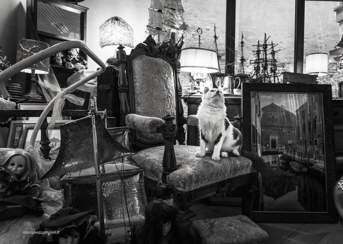 Oscar At The Antique Dealer