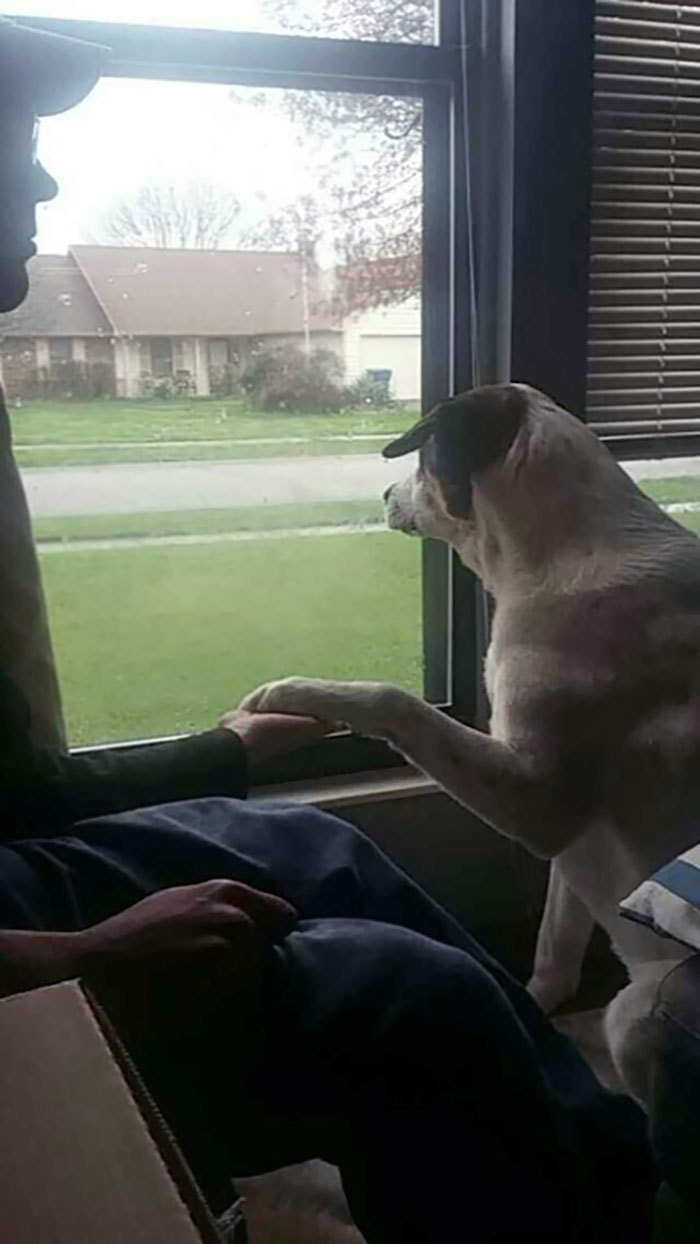 My Service Dog Is Trained To Respond To Anxiety. One Of The Ways He Responds Is By Making You Hold His Paw
