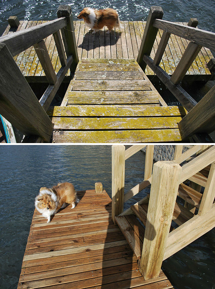 I Cleaned A Jetty Yesterday With A Power Washer. Hadn't Been Touched In Over 15 Years. Can't Believe The Difference It Made. Bonus Dog Pictures