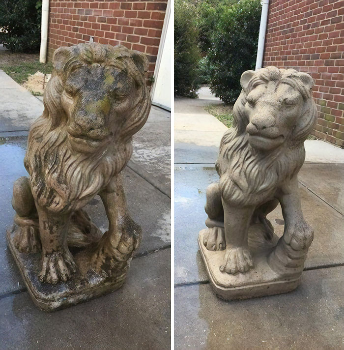 Before And After Of A Lion An Alumni Donated To My Fraternity. Pretty Happy With How It Turned Out