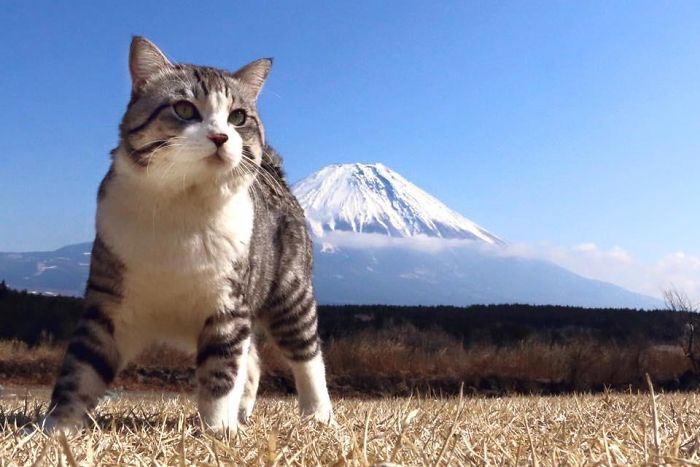Photogenic-Cat-Noraneko-Nyankichi-Japan