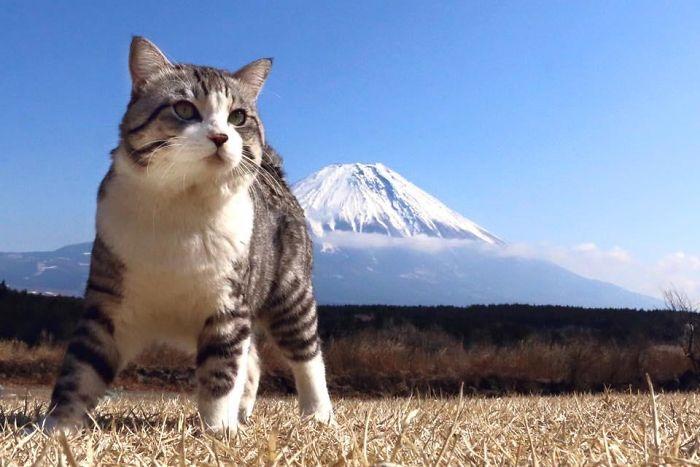 Photogenic-Cat-Noraneko-Nyankichi-Japan