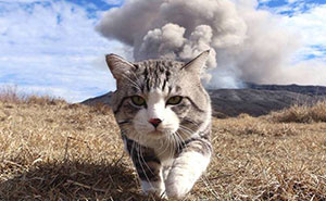 Este gato es físicamente incapaz de salir mal en ninguna foto