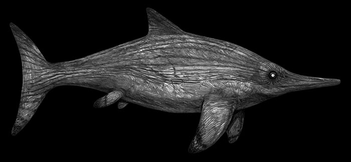 Pencil Illustration Of The Ichthyosaur Acamptonectes